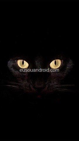 cat-eyes-animal-mobile-wallpaper-1080x1920-3935-3374423126